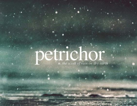 Petrichor: the scent of rain on dry earth. | Rain ...