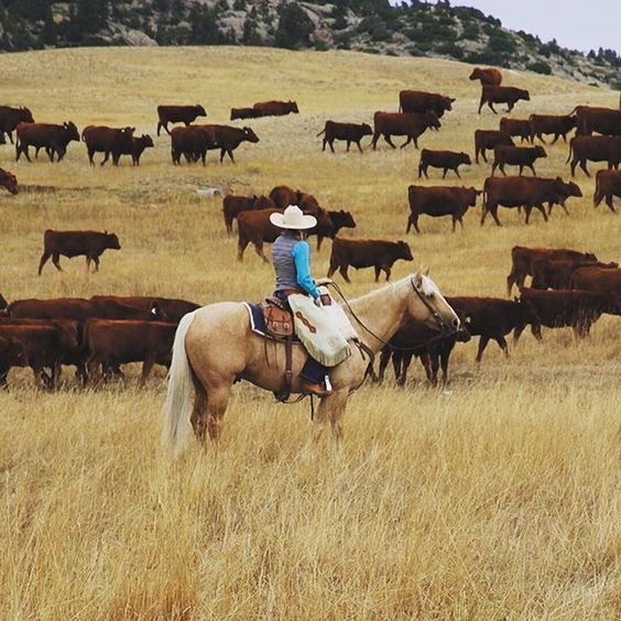 Wide open spaces are good for the heart. #wisdomwednesday Double tap if you agree! #cowgirlmagazine #iamcowgirl Photo by Robin Merrill: