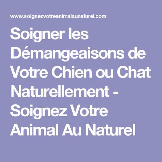 Soigner les Démangeaisons de Votre Chien ou Chat Naturellement - Soignez Votre Animal Au Naturel