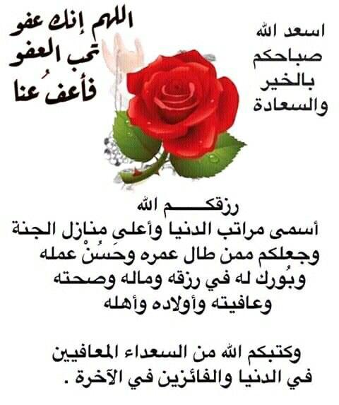 Pin By صل على النبي On صباحات ومسائات In 2021 Rose Plants Flowers