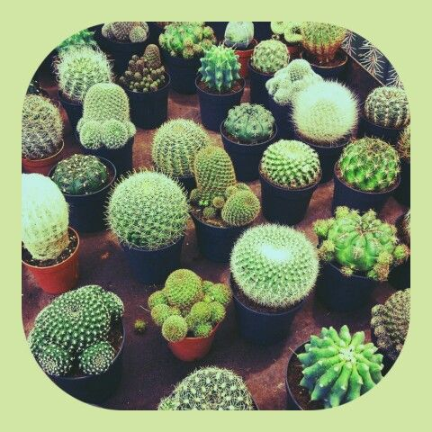 Samuel es un gran amante de los Cactus ..... Su jardín; )