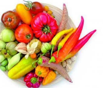 Sehr dringende Petition zu dem Thema: Gefahr für Saatgut durch neue Gesetze! Bitte unbedingt repinnen und unterstützen!