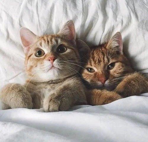 ❤MonChatDoré🐈   •  •  •  •  •  •  #cat #chat #gato #adorable #catlover #catpassion #cute