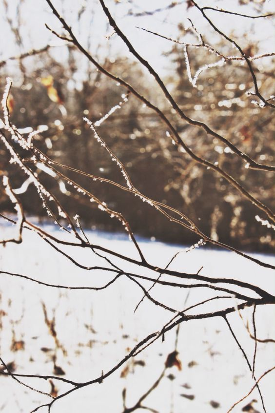 Winter. Ice. Storm. Nature. Photography. Carrie McClellan Photography. Sparkle.