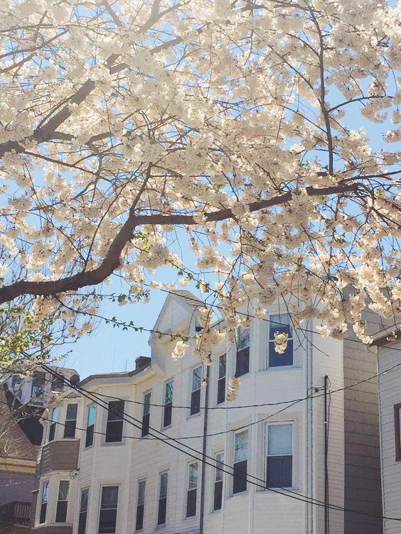 Home sweet home. | Bit by Bon   Boston. South Boston. G Street. Apartment. Spring. Bloom.