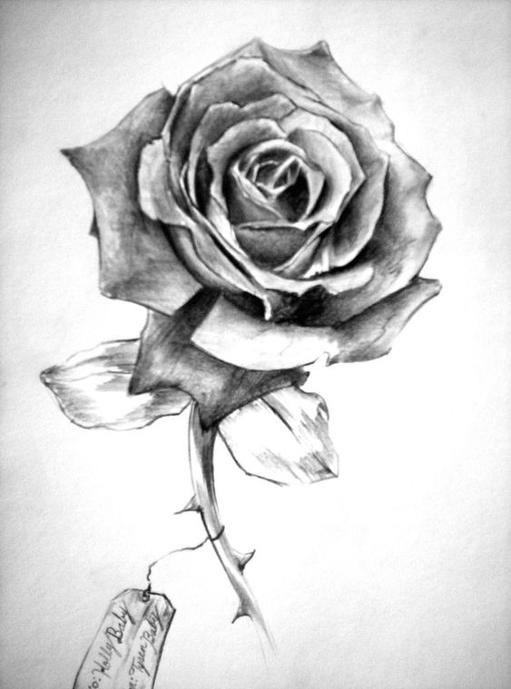 Pencil drawing rose with shading. This image is more order ...