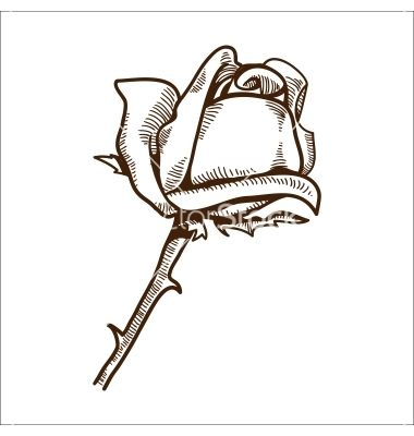 Rose flower isolated on white vector - by Chuhail on VectorStock®