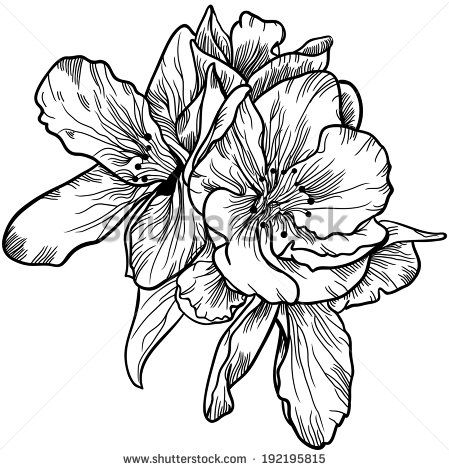 Black And White Flower Drawings - Shutterstock