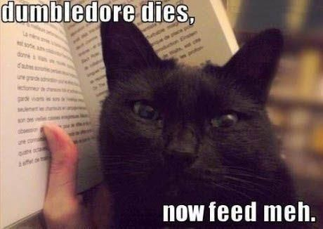 feed meh!