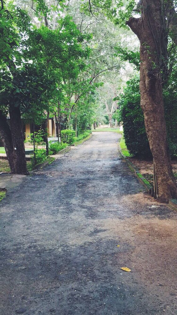 Path to your life