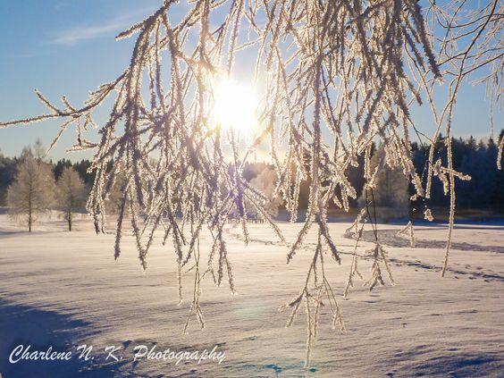 Soaking Up the Poetry of Winter |Blissful Solitary Wanderings