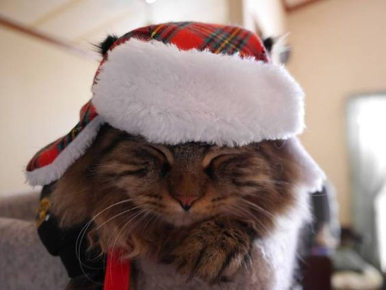 Zabu is ready for the holiday festivities! Sent in by Karen Desmarais: