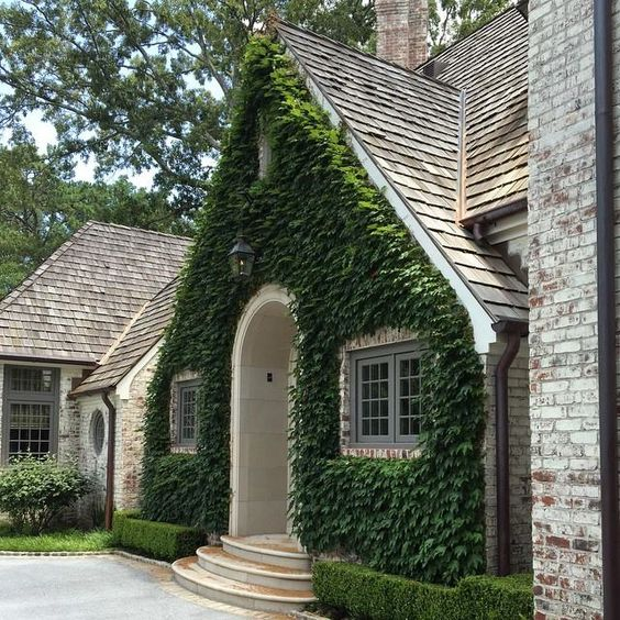 Motor Court Facade Of Boston Ivy And Clipped Boxwood On A