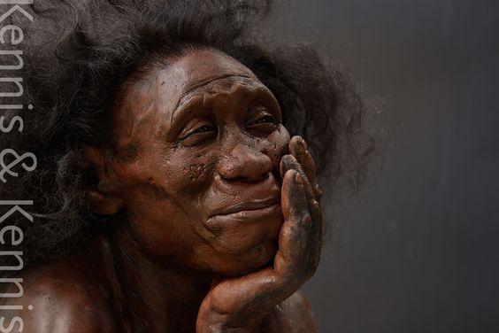 homo floresiensis Homo florensis synonyms, homo florensis pronunciation, homo florensis translation, english dictionary definition of homo florensis n homo erectus homo florensis homo floresiensis homo habilis homo heidelbergensis homo neanderthalensis homo rhodesiensis homo sapiens.