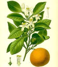 aceite esencial de Neroli