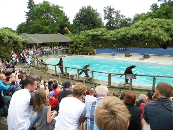 les otaries du zoo lucky wally cooky jimmy