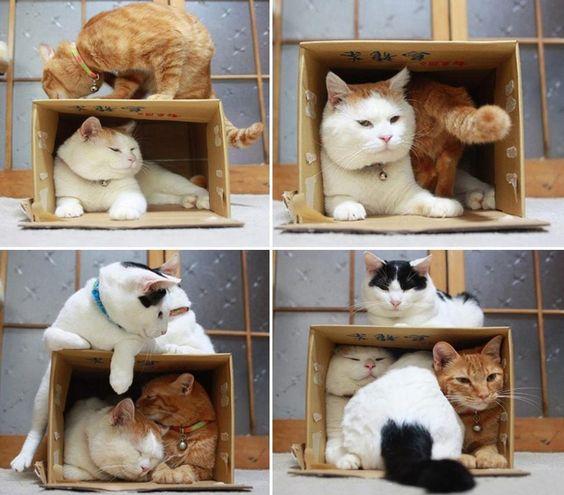 Essa caixa é minhaaaaa!