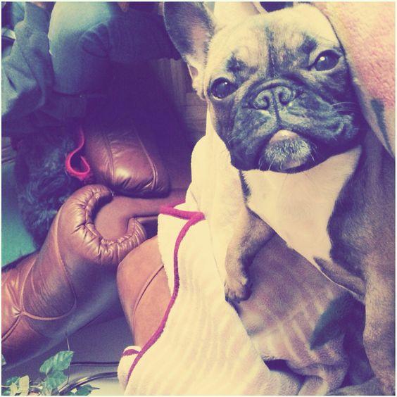 Frenchie the Lola