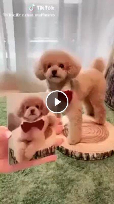 Cachorrinho fazendo pouse para fotos