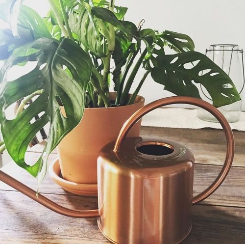 10 Indoor Watering Cans You Ll Want To Keep On Display In 2020 Indoor Watering Can Indoor Watering Watering Can