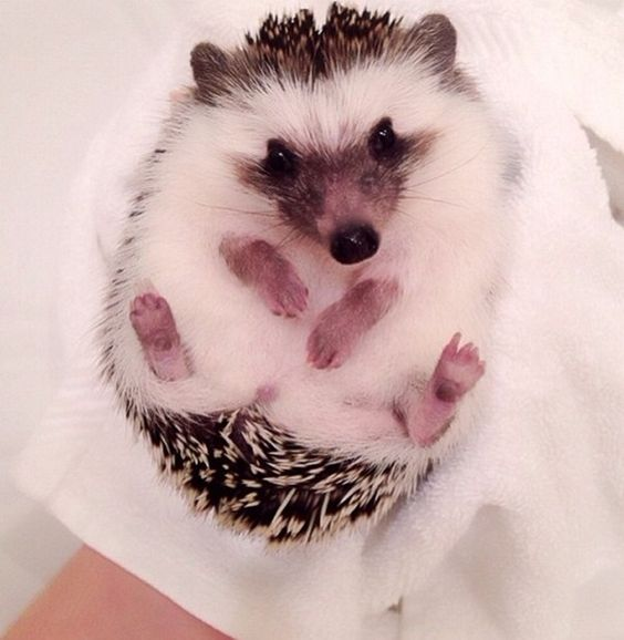 Cute Animals Pictures That Will Make You Say AWW !