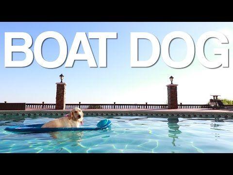 boat dog - YouTube I LOVE MY HOME BOY MARK!!!❤️