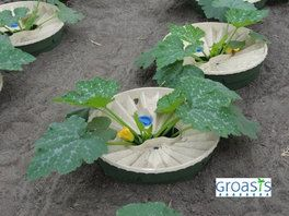 The Waterboxx is excellent at growing many garden crops without any watering after set up.  Zucchini usually need watered every 2-3 days. #droughttolerant