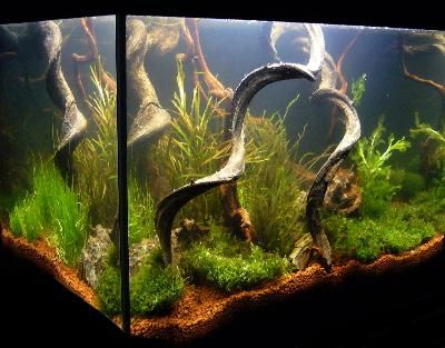 Bepflanzungsbeispiele f r aquarien aquascape pinterest - Aquarium dekorieren ideen ...