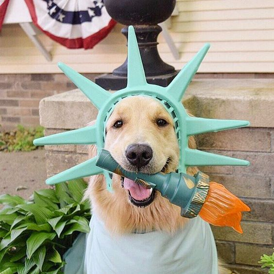 Addie | thegoldensrule: Life, Liberty, and the Pursuit of Happiness.