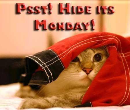 Hide... it's Monday!