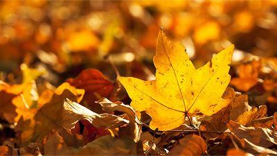 Am Donnerstag beginnt der Herbst nun auch kalendarisch, nachdem er…