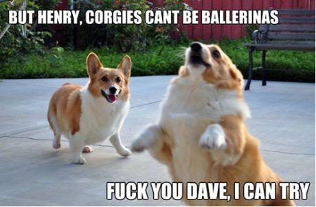 Corgies can't be ballerinas - Meme Picture   Webfail - Fail Bilder und Fail Videos