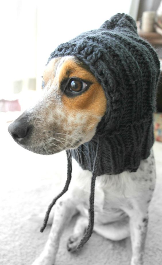 Knitting Pattern Hat Dog : Custom knit dog hat, dog hoodie, pet scarf, pet clothes, dog cowl Hats, Pet...