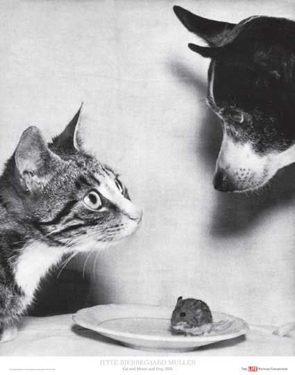 Cat and Mouse, and Dog, 1955  Time/Life Cover by Jytte Bjerregaard Muller