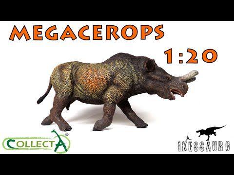 Megacerops Collecta