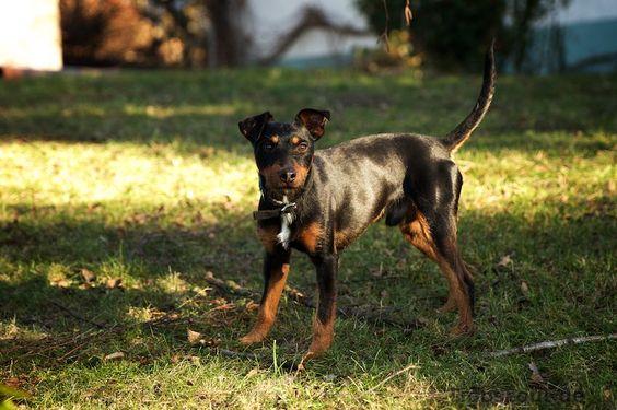 Für gute Bilder vom Hund braucht es oft zig Aufnahmen.