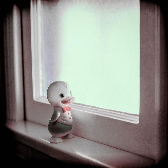 A rubber duckie looks out the window.
