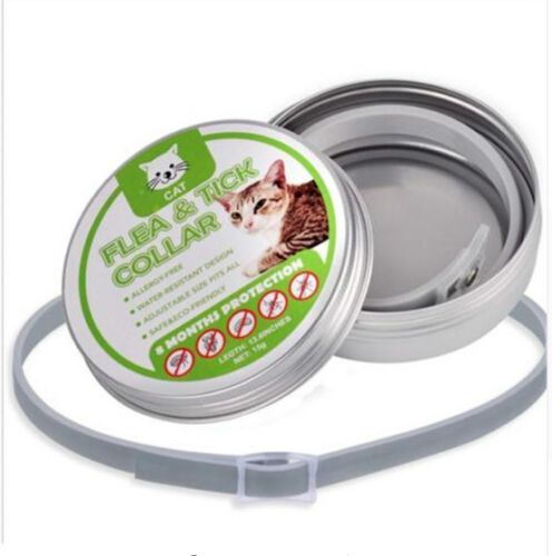 Collar Nekogirl Kittenplay Petplaycommunity Bayer Cat Fleas Flea And Tick Fleas