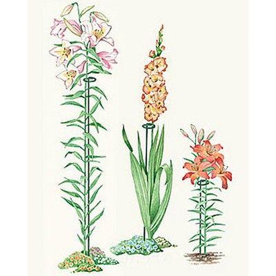 36 Single Stem Supports Set Of 3 Gardener S Supply Company Gladiolus Flower Garden Supplies Flowers