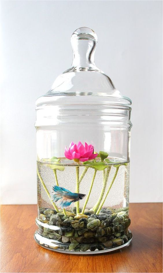 Lotus, Bêta and Aquarium on Pinterest
