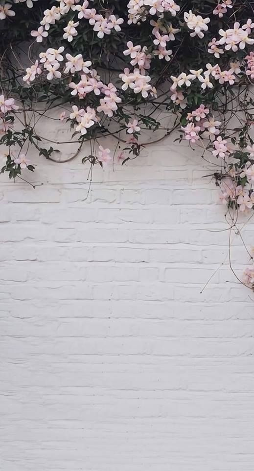 Pin By Ladyenroute On Wallpaper Pink Flowers Wallpaper Photography Wallpaper Backgrounds Phone Wallpapers