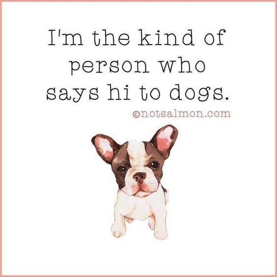I'm the kind of person who says hi to dogs ... #doglove