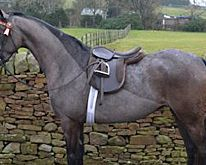 4 ways to wow the judges in the showring - Horse & Hound