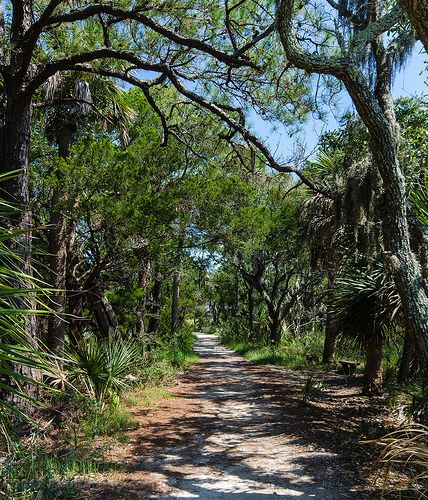 Beach Trail - Botany Bay WMA, Edisto Island, SC. Another bucket list #running destination.