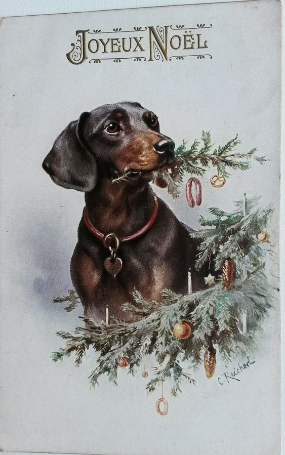 Vintage postcard Dachshund with Christmas tree branch by Reichert