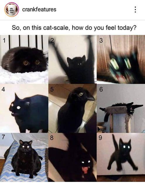 Pin By Nicole Jedlicka On Animais Familias Adoraveis Cat Tshirts Funny Cat Repellant Cat Emoji