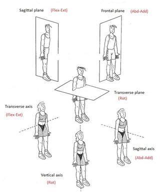 axis of rotation anatomy human body axis 1 transverse