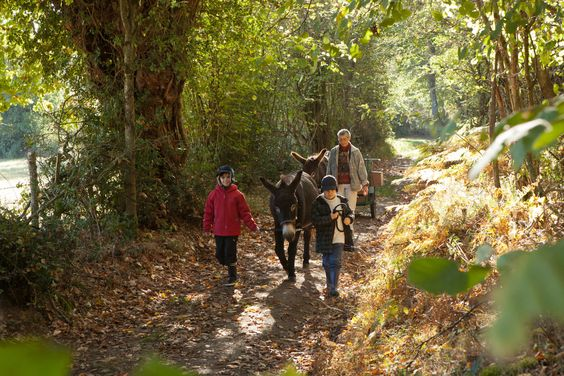 Accueil Paysan — Chambre d'hôtes, gîte, camping, ferme, auberge à la campagne