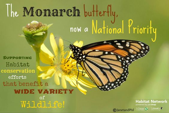 Working Lands for Wildlife works with partners and private landowners providing technical and financial assistance to implement conservation practices that benefit target species and priority landscapes. The monarch was listed because its habitat needs represent healthy and functioning ecosystems and conservation efforts for them go a long way to help a diversity of other wildlife. Read http://wildlife.org/monarch-butterfly-designated-as-a-national-priority-species/ for more on this…