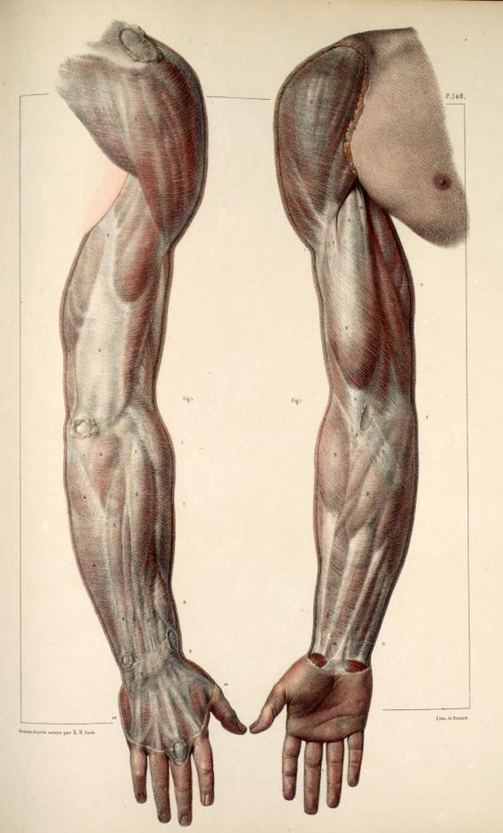 Docteur Bourgery : Traité complet de l'anatomie de l'homme (1831-1854)
